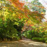 野趣あふれる庭園で癒しのひとときを…