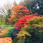 シェラトン都ホテル東京の紅葉